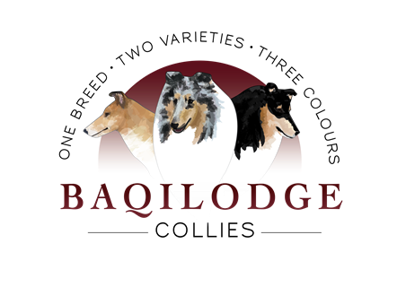 Baqilodge Collies